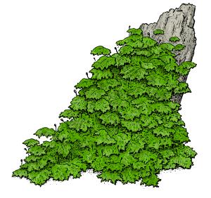 Moss-01