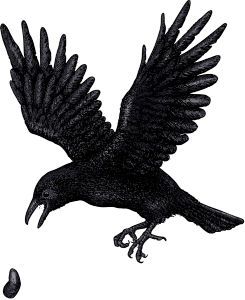 Northwest Crow v2